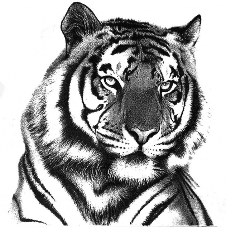 Tiger Pencil Art