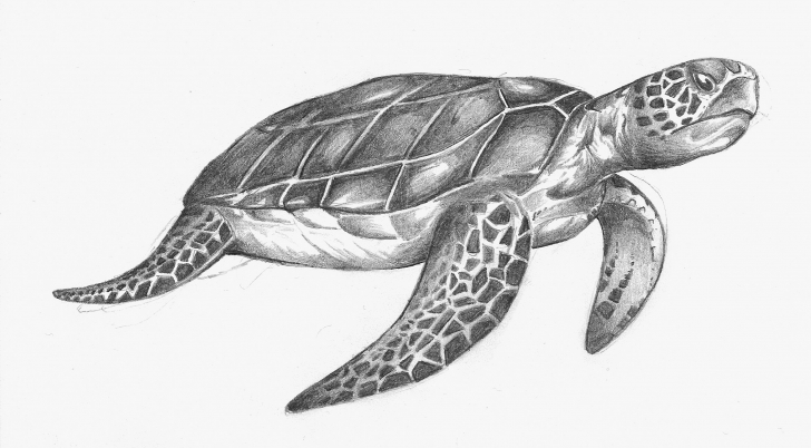 Popular Turtle Pencil Drawing Courses Pin By Elizabeth Mccoy On My Stuff In 2019 | Pencil Drawings, Turtle Pics