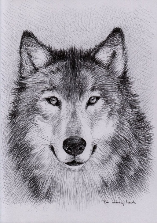 Popular Wolf Pencil Sketch for Beginners Pin By That Bass On Art In 2019 | Wolf Sketch, Wolf Painting, Wolf Picture