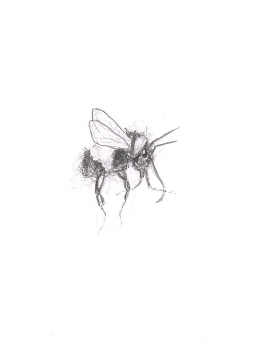 Remarkable Bee Pencil Drawing Free Bee Pencil Drawing Sketch Print Picture