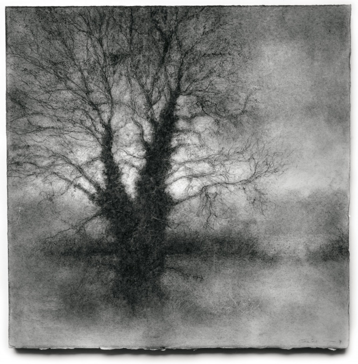 Remarkable Black And White Charcoal Drawings for Beginners Winter Tree 4 (Black & White Realistic Landscape Charcoal Drawing On Paper) Image