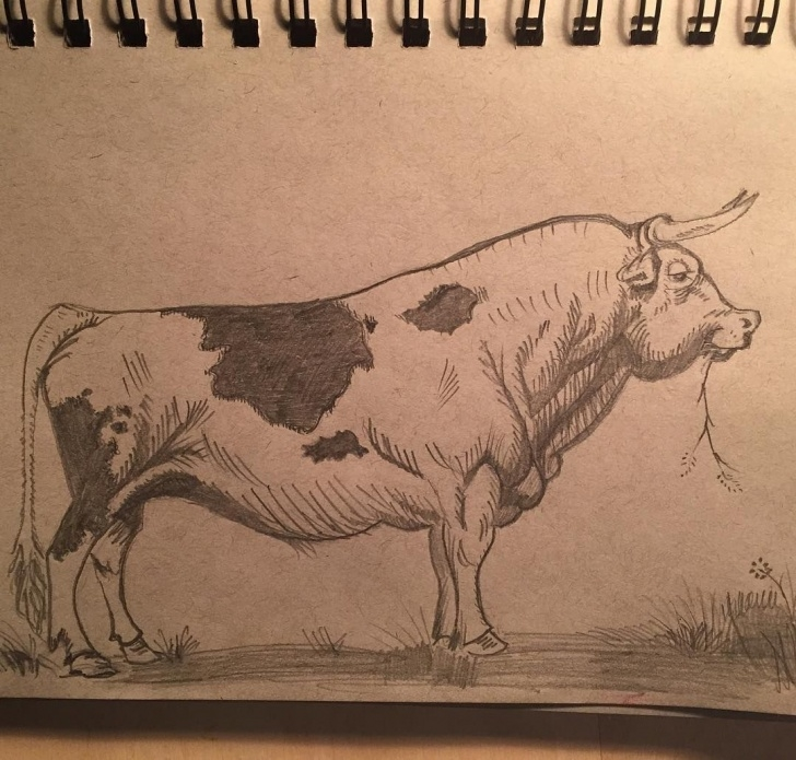 Remarkable Bull Pencil Drawing Courses Pencil Sketch Of Ferdinand The Bull. | Art/decorative In 2019 Picture