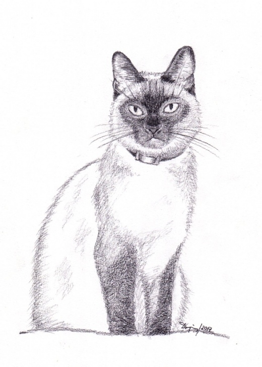 Remarkable Cat Pencil Drawing Courses File:siamese Cat, Pencil Drawing - Wikimedia Commons Image