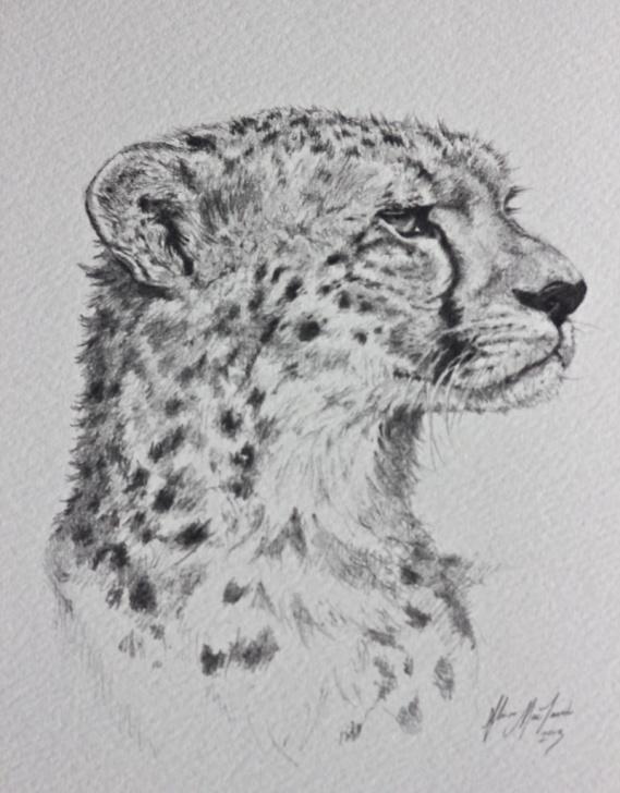 Remarkable Cheetah Pencil Drawing Tutorials Cheetah Pencil Drawing | Dad's Father's Day Gift. Cheetahs A… | Flickr Photos