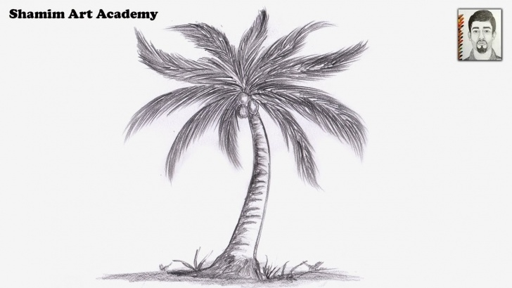 Coconut Tree Pencil Drawing