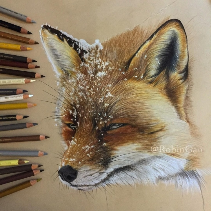 Remarkable Colored Pencil Animals Easy Design Stack: A Blog About Art, Design And Architecture: Realistic Photos
