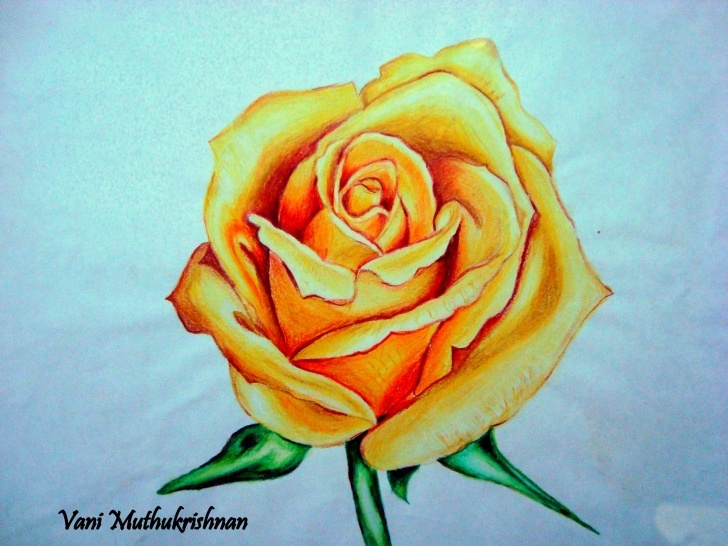Remarkable Colour Pencil Shading Flowers Techniques Yellow Rose | Mypencilwork Photo