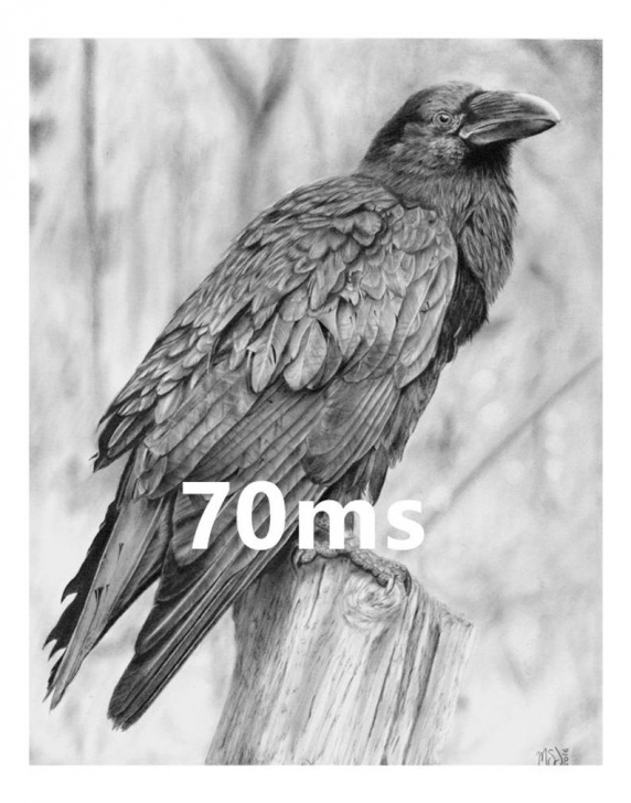 Remarkable Crow Pencil Drawing Lessons Raven - Original 11X14 Pencil Drawing By 70Ms - Crow, Nevermore, Edgar  Allen Poe, Bird Image