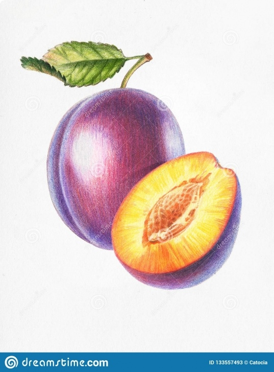 Remarkable Drawing Fruit With Colored Pencils Tutorial Plum And Half Plum_Color Pencil Drawing Stock Illustration Images