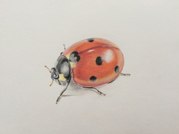 Remarkable Drawing Insects Pencil Step by Step Colored Pencil Drawing Ladybird,original Art,ladybird Art,wall Decor Photo