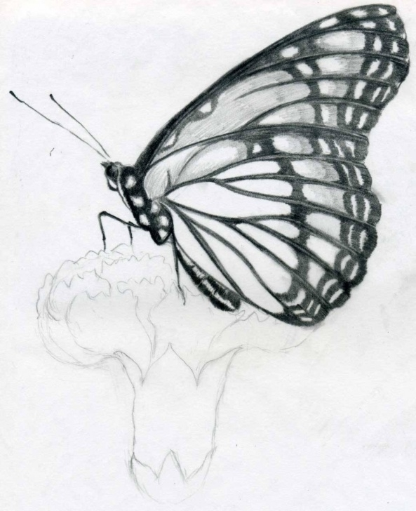 Remarkable Drawings To Copy With Pencil Tutorial Free Drawings Easy, Download Free Clip Art, Free Clip Art On Clipart Picture