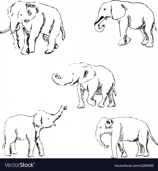 Remarkable Elephant Pencil Sketch Techniques Elephants A Sketch By Hand Pencil Drawing Photos