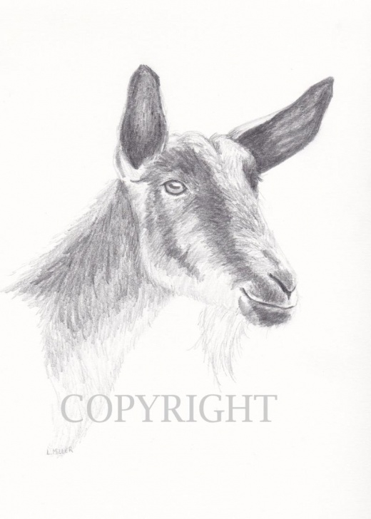 Remarkable Goat Pencil Drawing Step by Step Goat Pencil Drawing, Original 8X10 Graphite Fine Animal Art Images