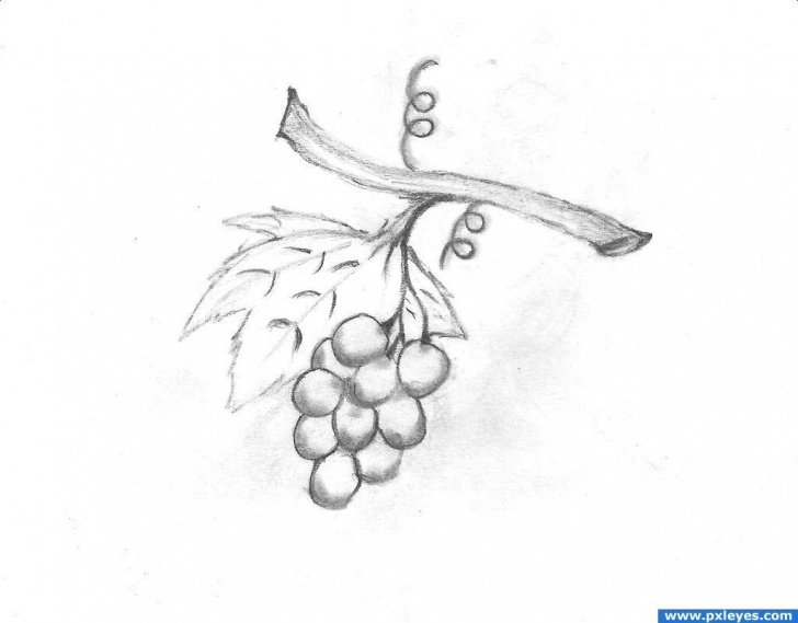 Remarkable Grapes Pencil Drawing Techniques for Beginners Free Grapes Drawing, Download Free Clip Art, Free Clip Art On Images