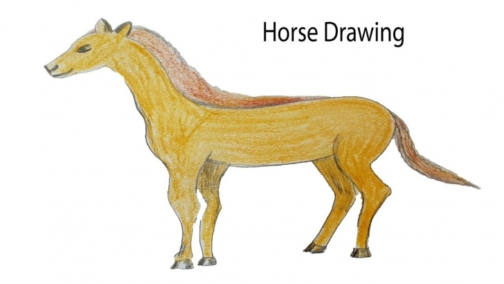 Remarkable Horse Drawing Colour for Beginners How To Draw A Horse Step By Step Easy Horse Drawing Colour For Kids Photo