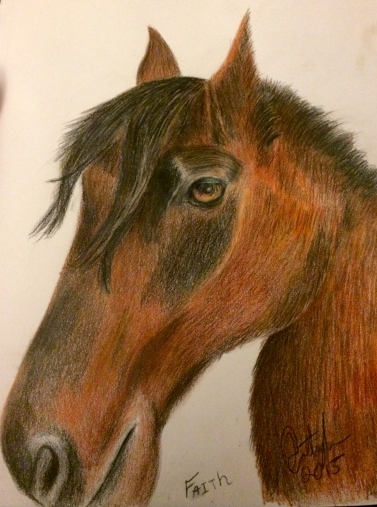 Remarkable Horse Drawing Colour Free A Color Pencil Drawing Of Faith - Jacob Cottinghamjacob Cottingham Image