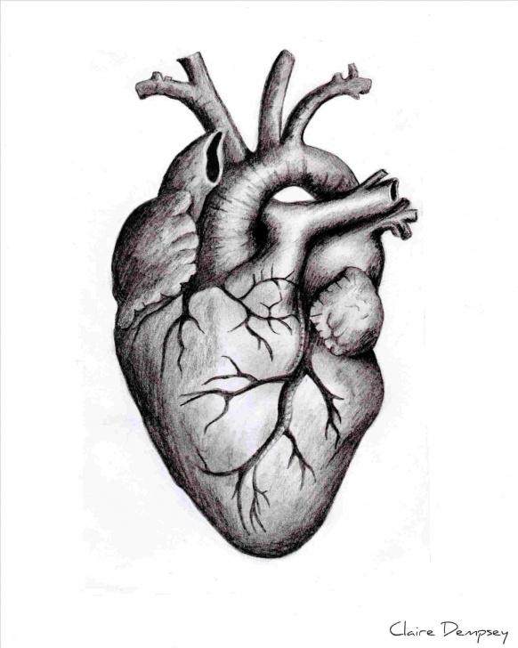 Remarkable Human Heart Pencil Sketch Courses Human Heart Drawings In Pencil | Drawing Work Image