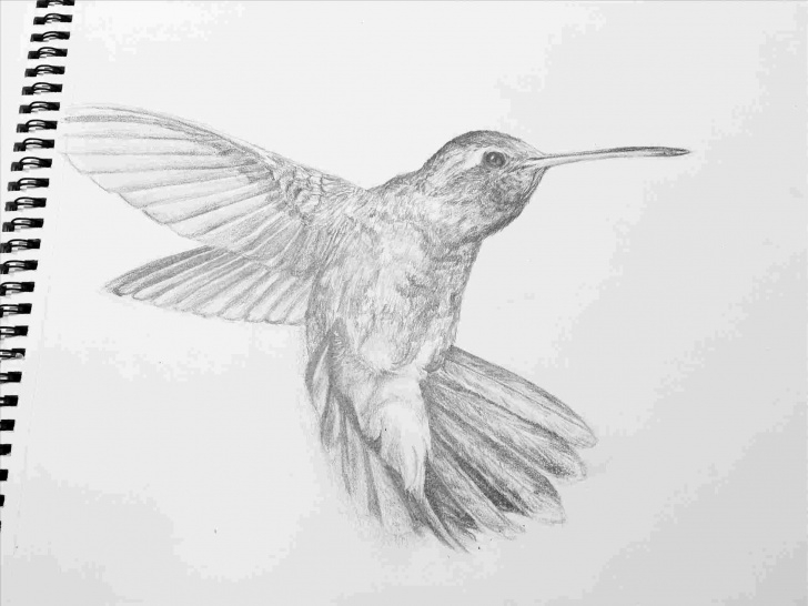 Remarkable Hummingbird Drawings In Pencil for Beginners Pencil Drawings Of Hummingbirds | Drawing Work Images