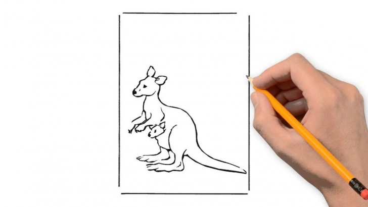 Remarkable Kangaroo Pencil Drawing for Beginners Kangaroo Animals Pencil To Draw Step By Step Photos