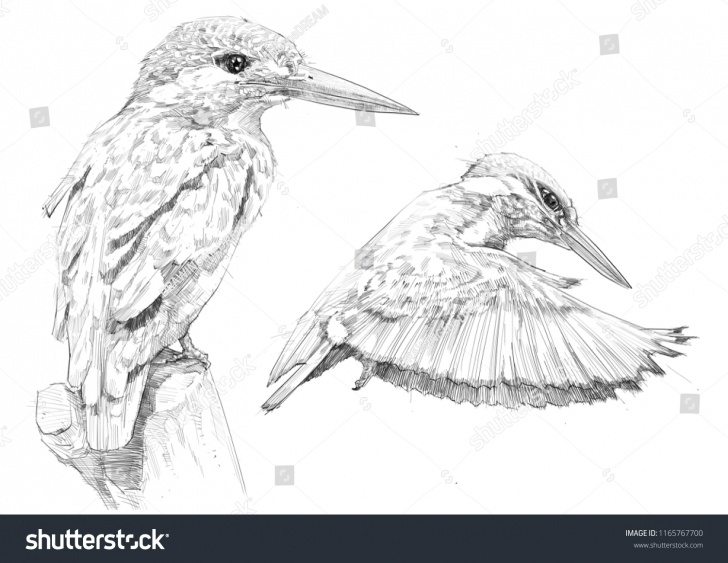Remarkable Kingfisher Pencil Drawing Tutorials Kingfisher Bird Sketch Pencil Drawing Stock Illustration 1165767700 Images