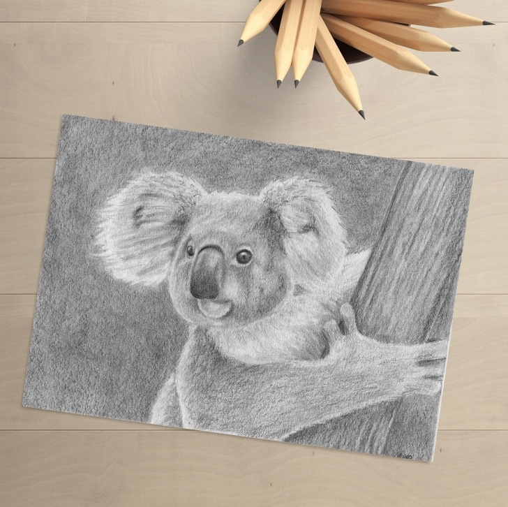Remarkable Koala Pencil Drawing Techniques for Beginners Koala - Pencil Drawing - Koala Bear - Original Drawing - Koala Drawing-  Koala Art- Original Art - Wildlife Art - Koala Decor - Bear Decor Pictures
