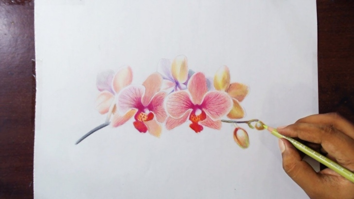 Remarkable Orchid Pencil Drawing Courses 45 Beautiful Flower Drawings And Realistic Color Pencil Drawings Image