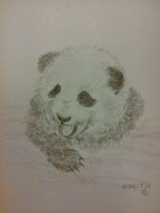 Remarkable Panda Pencil Drawing Tutorials Original Pencil Sketch - Panda Bears - Pencil Sketches Photo