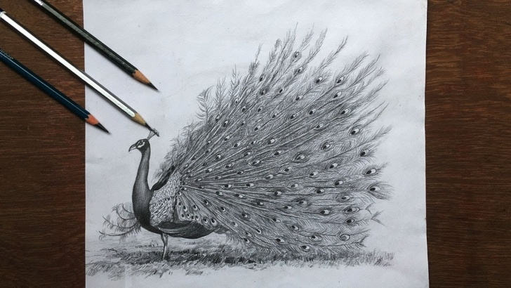 Remarkable Pencil Art Peacock Free Drawing A Dancing Peacock In Pencil | Peacock Drawing Step By Step | Bird  Pencil Sketch Image