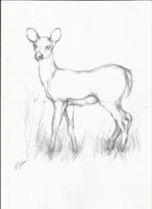 Remarkable Pencil Drawings Of Animals Step By Step Lessons Simple Line Drawings Of Deer - Google Search | Drawing And Painting Image