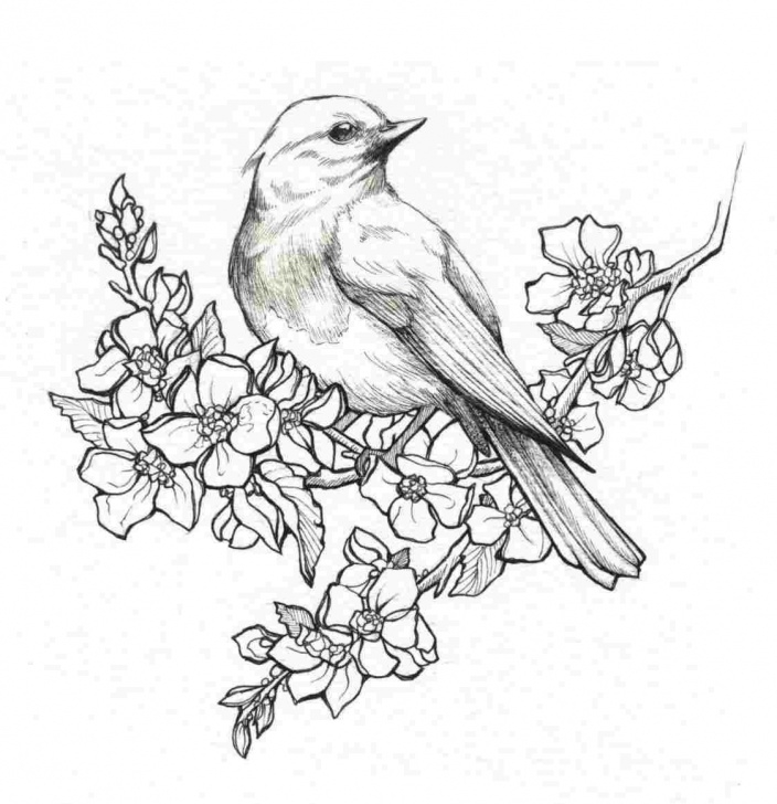 Remarkable Pencil Drawings Of Birds And Animals Easy Pencil Drawings Of Flowers And Birds  | Birds In 2019 | Pencil Picture