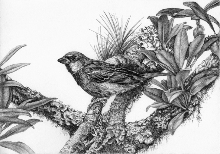 Remarkable Pencil Drawings Of Birds And Animals Step by Step Birds - Pencil Drawings 4 On Pantone Canvas Gallery Pictures