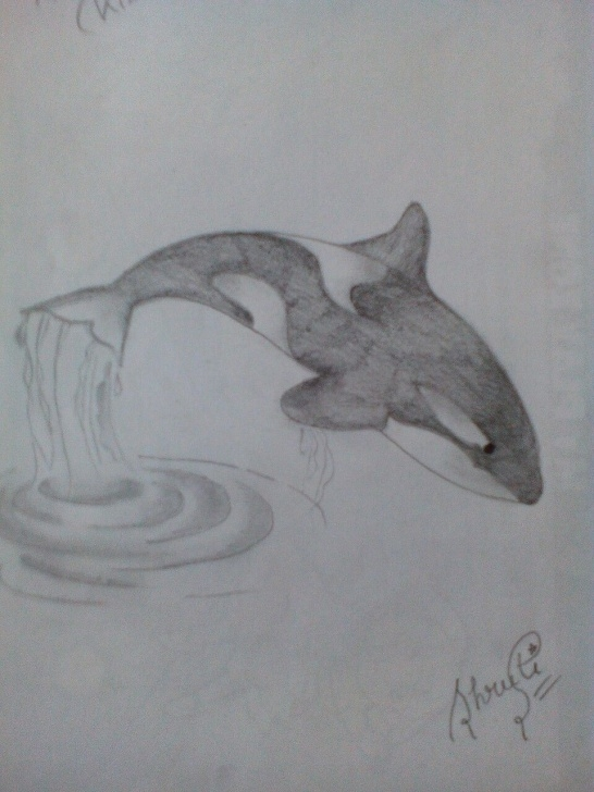 Remarkable Pencil Shading Drawing For Beginners Step by Step Orcas. Simple Pencil Shade. Best And Easy For Children | I Love Art Picture