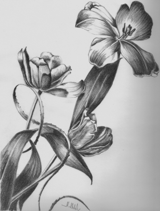 Remarkable Pencil Shading Flowers Courses Flower Pot Drawing In Pencil Shade And Flower Pot Shading - Flowers Images