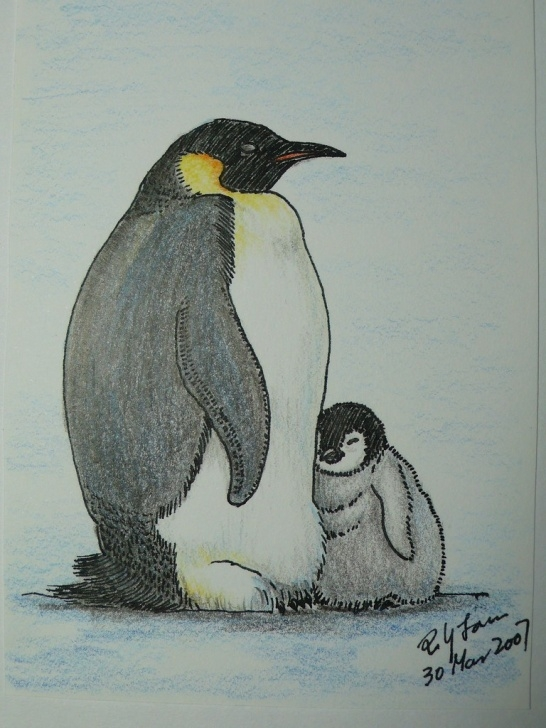 Remarkable Penguin Drawings In Pencil Easy Emperor Penguin Color Pencil Drawing | Poyee_Lam0321 | Flickr Photos