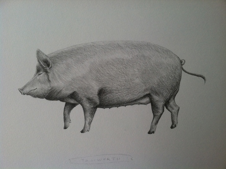 Remarkable Pig Pencil Drawing Simple Drawings | Amelia Kai Roberts Pics