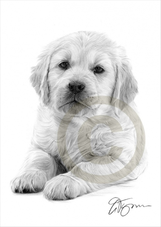 Remarkable Puppy Pencil Drawing Courses Dog Golden Retriever Puppy Pencil Drawing Print - A4 Size - Artwork Signed  By Artist Gary Tymon - Ltd Ed 50 Prints Only - Pencil Portrait Pic
