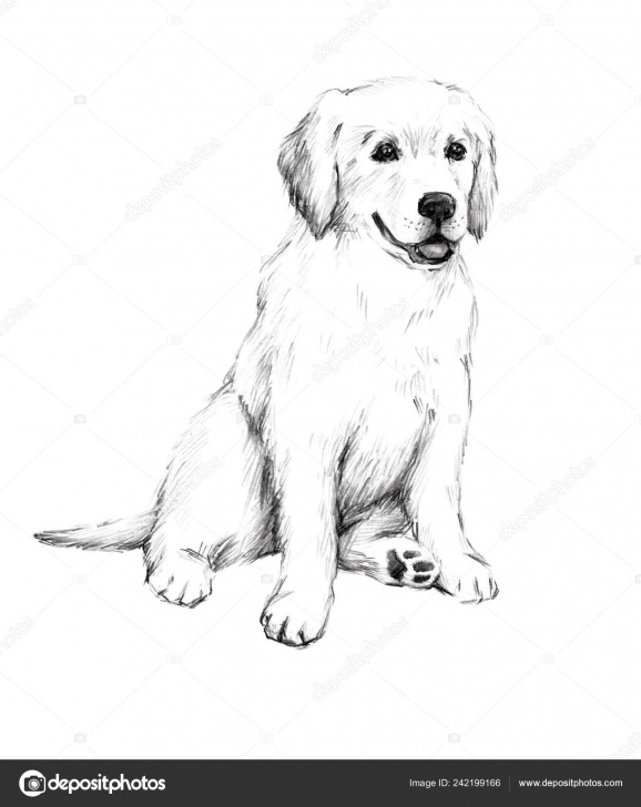 Remarkable Puppy Pencil Drawing Free Animal Sketch Pencil Drawing Dog Cute Little Puppy Illustration Pet Pic