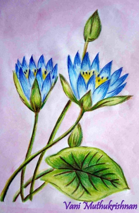 Remarkable Shading Flowers With Colored Pencil Free How Color Pencil Shading Flowers To Draw A Flower With | Drawing Pics