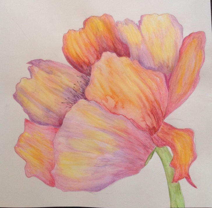 Remarkable Watercolor Pencil Flowers Techniques for Beginners Drawing Using Watercolor Pencil. | Margaret Ramberg Paintings And Image