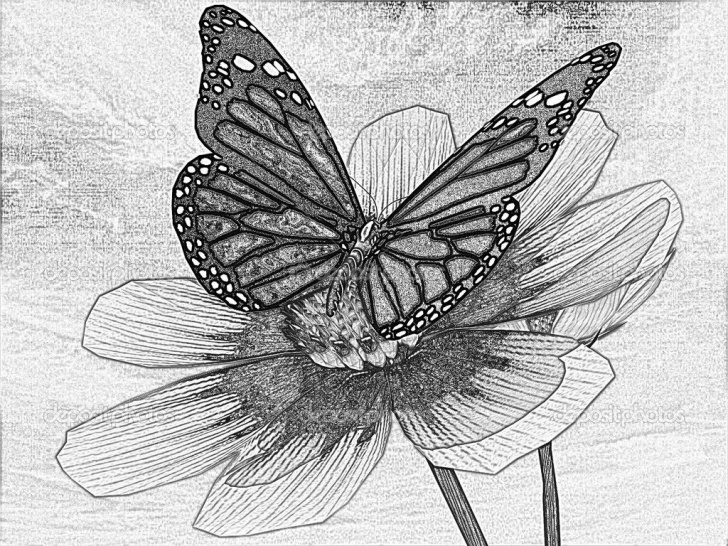 Stunning 3D Butterfly Drawings In Pencil Ideas Butterfly On Flower Drawings In Pencil 3D Butterfly Drawings In Pictures