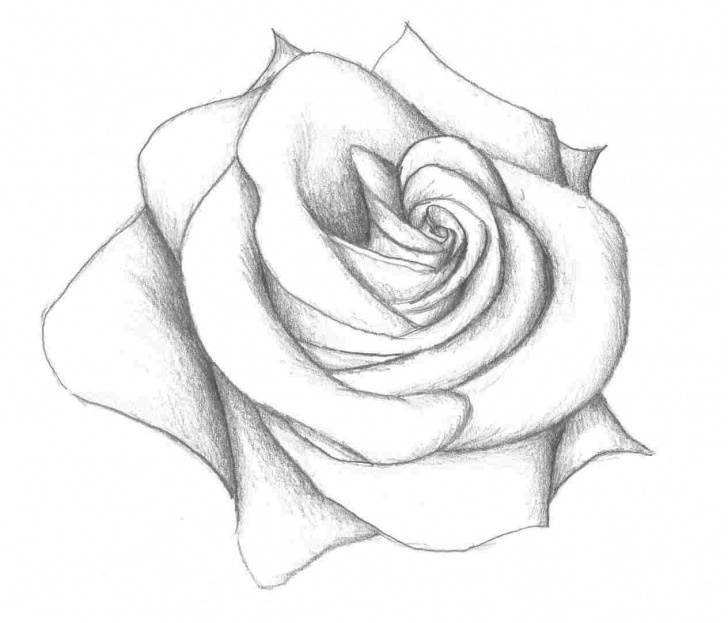Stunning 3D Rose Pensil Sketch Step By Step Easy Pictures: 3D Rose Drawing Easy, - Easy Drawing Picture Images