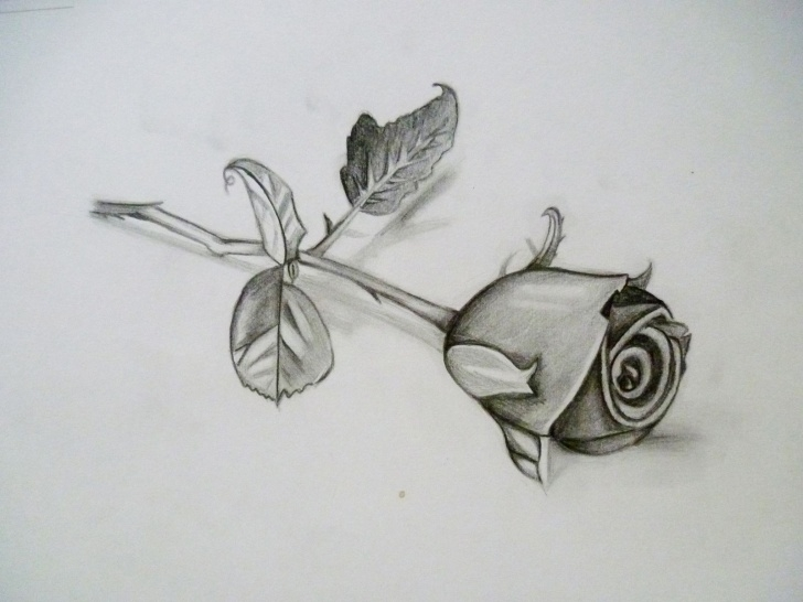 3D Rose Pensil Sketch Step By Step