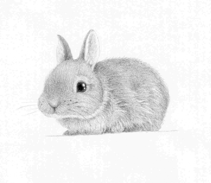 Stunning Animal Drawing Pencil Easy Pencil Drawing Images Animals At Paintingvalley | Explore Images