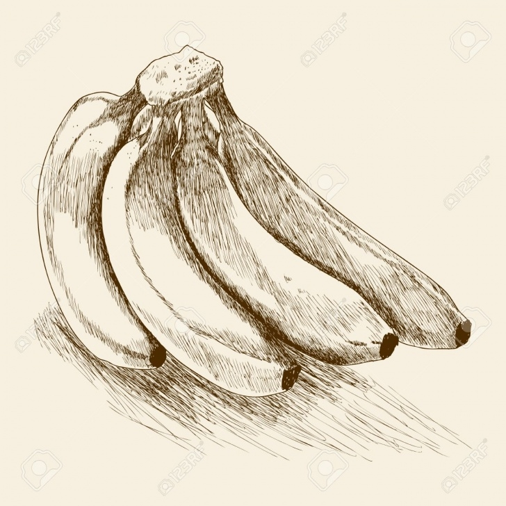 Stunning Banana Pencil Sketch Courses Banana Drawing Sketch And Banana Pencil Sketch Pencil Drawing Of A Images