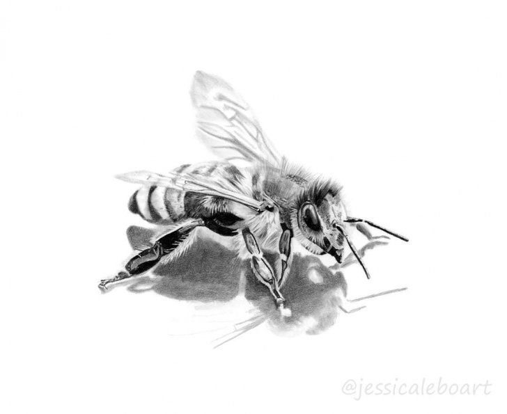 Stunning Bee Pencil Drawing Simple Pencil Drawing Tutorials Graphite Pencil Bee Drawing. - A Collection Picture