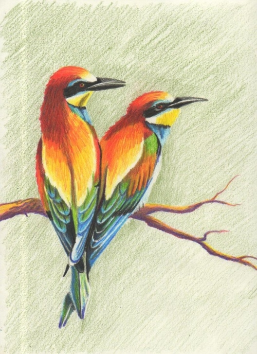 Stunning Bird Colored Pencil for Beginners Colorful Birds, Colored Pencil Drawing Image