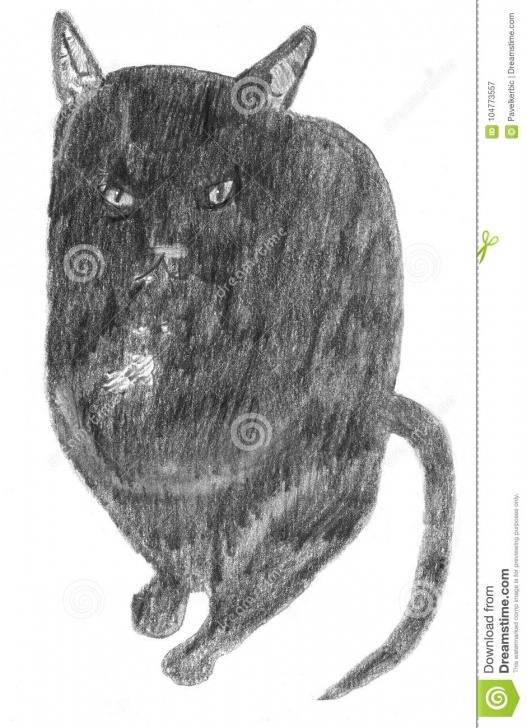 Stunning Black Cat Pencil Drawing Easy Lovely Black Cat - Pencil Drawing Stock Vector - Illustration Of Pictures
