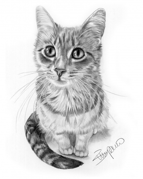 Stunning Cat Pencil Drawing Easy Cat Pencil Drawing By Wendy Zumpano Www.pencilportraitcards Images