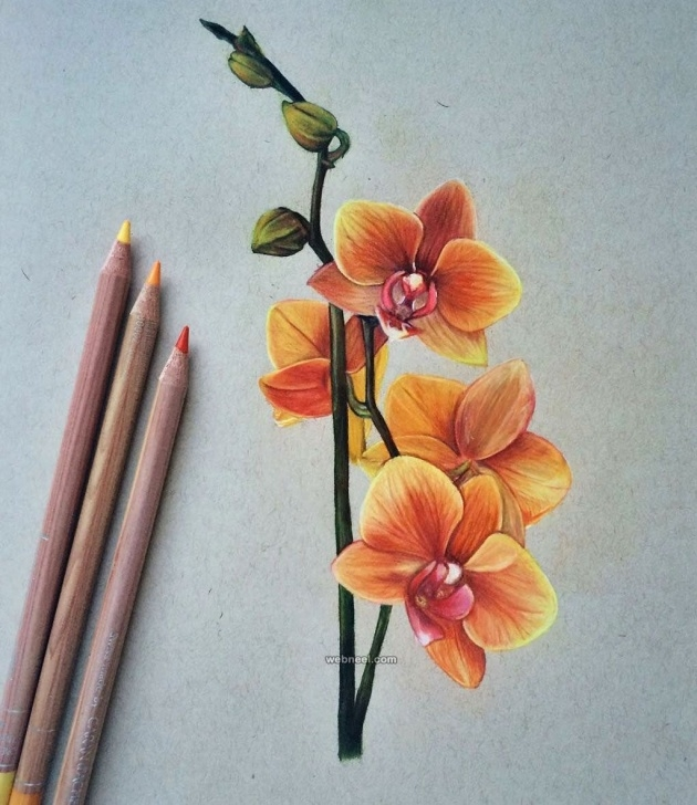Colour Pencil Sketches Flowers