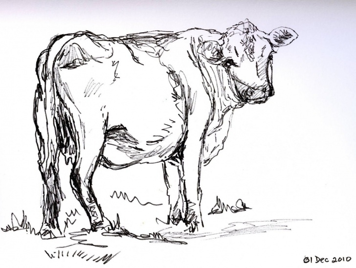 Stunning Cow Pencil Art Ideas Love You Like A Cow | Cows | Cow Sketch, Cow Drawing, Pencil Pic